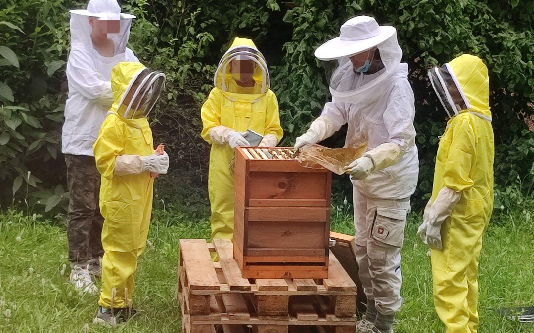 Ein Bienenvolk in der PMH